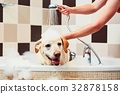 Dog taking a bath 32878158