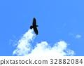 비행, 까마귀, 푸른 하늘 32882084