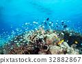 青い海と太陽とサンゴ 32882867
