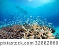 海洋 海 蓝色的水 32882869