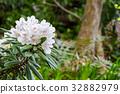 植物 植物學 植物的 32882979