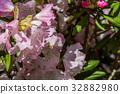 植物 植物學 植物的 32882980