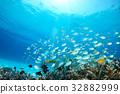 푸른 바다와 태양 그리고 물고기들 32882999