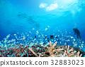 珊瑚 蓝色的海洋 海底的 32883023