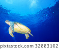 바다 거북과 푸른 바다 32883102
