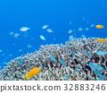珊瑚 蓝色的海洋 海底的 32883246