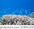 珊瑚 蓝色的海洋 海底的 32883248