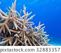 海洋 海 蓝色的水 32883357