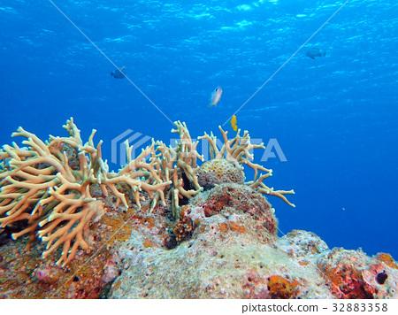 珊瑚 蓝色的海洋 海底的 32883358