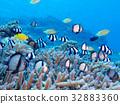 海洋 海 蓝色的水 32883360