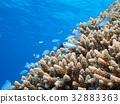 海洋 海 蓝色的水 32883363
