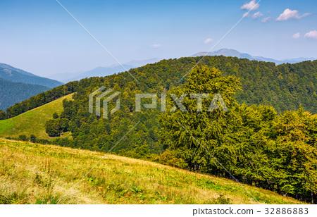 forest on hills of mountain ridge in autumn 32886883