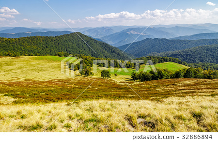 forest on beautiful mountain hills in autumn 32886894