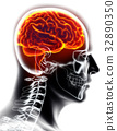 Human Internal Organic - Brain. 32890350