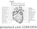 Anatomical Human heart inscription 32891959