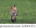 Kita狐狸的孩子们 32894351