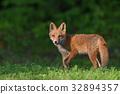 Kita狐狸的孩子们 32894357