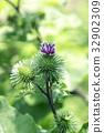 花朵 花 花卉 32902309