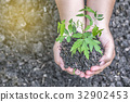 Two hands holding the tree to plant 32902453