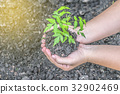 Two hands holding seedlings to plant 32902469