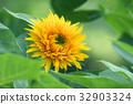 花朵 花 花卉 32903324