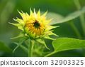 花朵 花 花卉 32903325