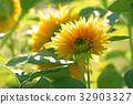 花朵 花 花卉 32903327