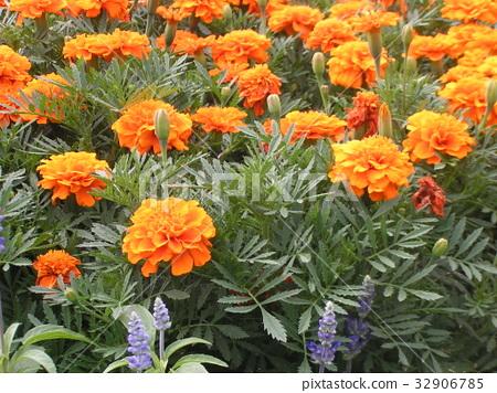 ดอกไม้,ฤดูร้อน,หน้าร้อน 32906785