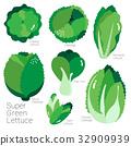 SUPER GREEN LETTUCE 32909939