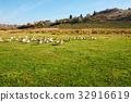 field, fowl, geese 32916619