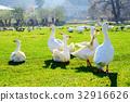beak, bird, fowl 32916626