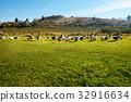 field, fowl, geese 32916634