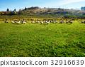 field, fowl, geese 32916639