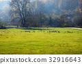 field, fowl, geese 32916643