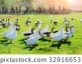 beak, bird, fowl 32916653