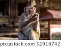 Monkey eating banana. 32916742