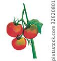 水彩 水彩畫 西紅柿 32920801