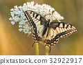 Beautiful nature scene with butterfly. 32922917