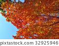 ต้นเมเปิล,ฤดูใบไม้ร่วง,ผักใบ 32925946