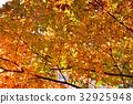 ต้นเมเปิล,ฤดูใบไม้ร่วง,ผักใบ 32925948