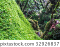 Akatsuki Forest / Yakushima / Shiratani Unsuikyo 32926837