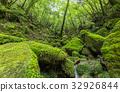 yakushima, forest, woodland 32926844