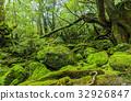 yakushima, forest, woodland 32926847