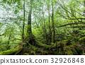 yakushima, forest, woodland 32926848