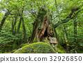 yakushima, japanese cedar, forest 32926850