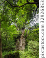 Jomon Sugi / Yakushima World Heritage Site / National Park 32926853