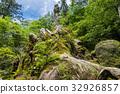 national park, yakushima, forest 32926857