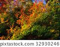 ต้นเมเปิล,ฤดูใบไม้ร่วง,ผักใบ 32930246