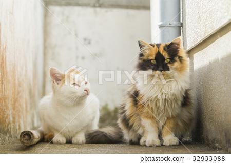 แมว,สัตว์,ภาพวาดมือ สัตว์ 32933088