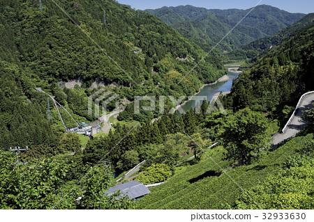 Tenryu River and Tea Field 32933630